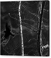 Crow Behind The Trees Canvas Print