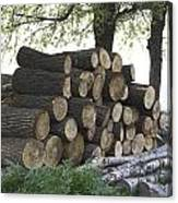 Cut Tree Trunks Piled Up For Further Processing After Logging Canvas Print