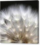 Dandelion Backlit Close Up Canvas Print