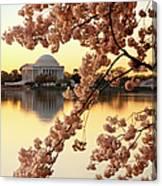 Dawn Over The Jefferson Memorial  Canvas Print