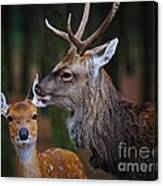 Deer Love Canvas Print