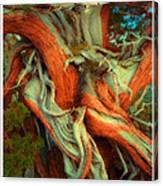 Deranged Redwood Canvas Print