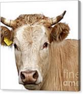 Detail Of Cow Head Canvas Print