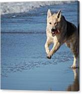 Dog On Beach Canvas Print