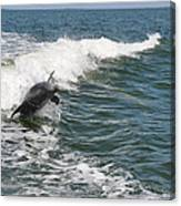 Dolphin Leap Canvas Print
