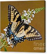 Eastern Tiger Swallowtail Butterfly Canvas Print