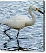 Coastal Egret Canvas Print