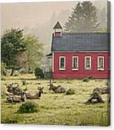 Elk In The School Yard Canvas Print