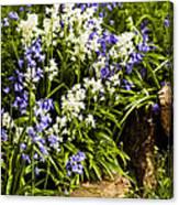 English Country Garden Canvas Print
