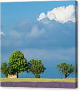 Evening In Provence Canvas Print