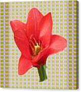 Exotic Red Tulip In Bold And Two Border Patterns Tiny Sparkle Parallal Horizontal Strips Summer Flow Canvas Print