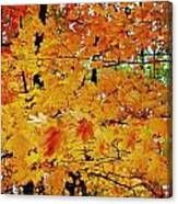 Fall Colors 2014-3 Canvas Print