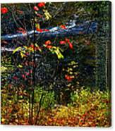 Fall Forest And River Canvas Print