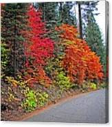 Fall's Splendor Canvas Print