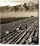 Farm Workers And Mt Williamson 1940s Canvas Print