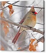 Female Cardinal In Winter Canvas Print
