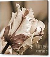 Flaming Parrot Tulip Canvas Print