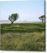 Florida Bay Everglades Canvas Print