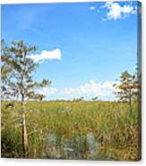 Florida Everglades Canvas Print