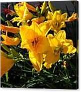 Flower In Idaho Falls Canvas Print