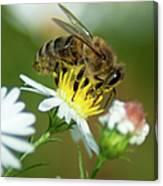 Flowering Bee Canvas Print