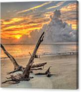 Folly Beach Driftwood Canvas Print
