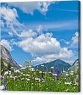 Franconia Notch - Lupine And Daiseys  Canvas Print