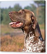 German Short-haired Pointer Dog Canvas Print