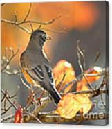Glowing Robin Canvas Print