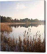 Golden Reeds Canvas Print