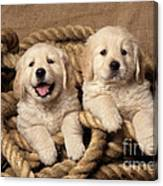 Golden Retriever Puppies Canvas Print