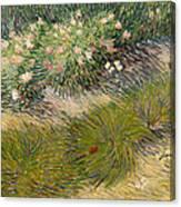 Grass And Butterflies Canvas Print