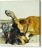 Great Dane And Australian Sheperd Canvas Print