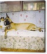 Great Dane And Calico Cat Canvas Print