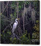 Lowcountry Marsh White Heron Canvas Print
