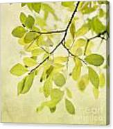 Green Foliage Series Canvas Print