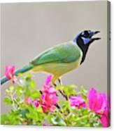 Green Jay (cyanocorax Yncas Canvas Print