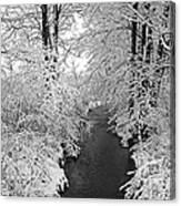 Heavy With Snow Canvas Print