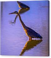 Heron Hues Canvas Print