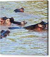 Hippopotamus Group In River. Serengeti. Tanzania. Canvas Print