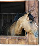 Horse In Stable Canvas Print