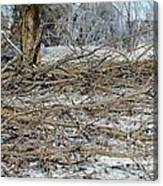 Ice Storm Poplars Canvas Print