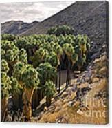 Indian Canyons - California Canvas Print