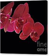 Inspired By Orchids Canvas Print
