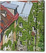 Ivy Courtyard Canvas Print