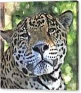Jaguar 2 Canvas Print