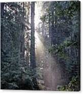 Jedediah Smith Redwoods State Park Redwoods National Park Del No Canvas Print