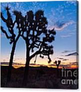 Josua Trees Beautifully Lit During Sunrise In Joshua Tree Nation Canvas Print