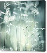June Green Grass Flowering Canvas Print