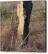 Kansas Country Limestone Fence Post Close Up With Grass Canvas Print